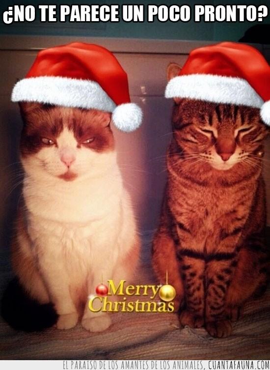 gatos,gorro de papa noel,merry christmas,muy pronto,navidad