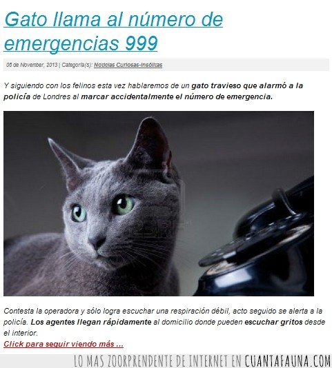 999,emergencias,gato,troll,troll cat