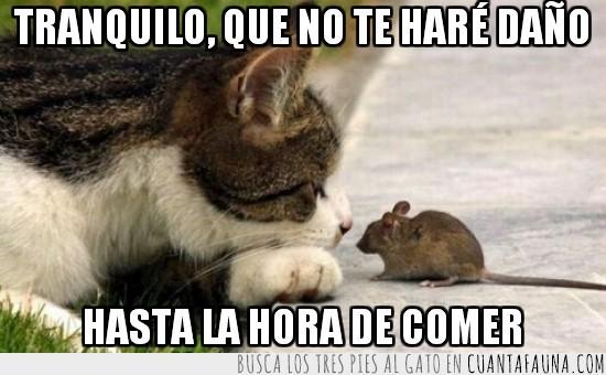 gatos,hacer daño,hora de comer,raton,ratones,tranquilo
