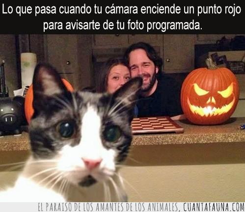 Calabazas,Cámara,Foto,Gato,Halloween,Mirada,Punto rojo,Sorprender