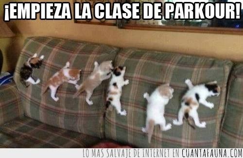 aprendiendo,cachorros,gatitos,parkour,sofá