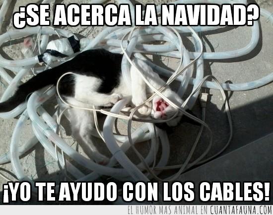Ayudar,Cables,Enredar,Felicidad,Navidad,Tobi