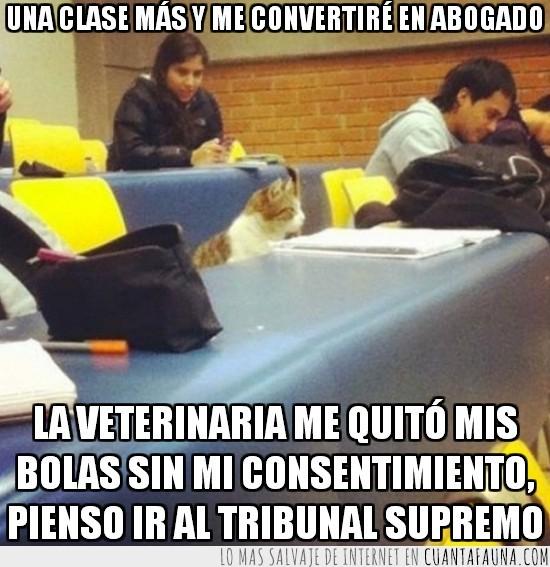 abogado,derecho,estudio,gato,humano,tribunal superior,universidad