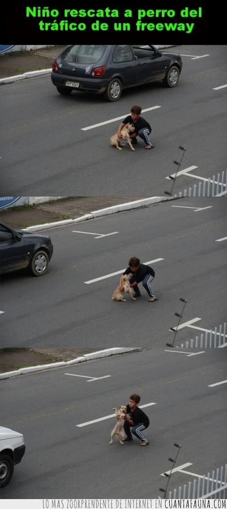 carretera,heroe,niño,perro,rescate,tráfico