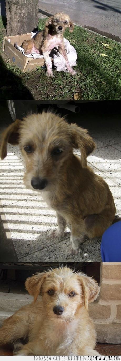 adopcion,amigo,ayudar,mi mejor amigo,perretes para todos,perro