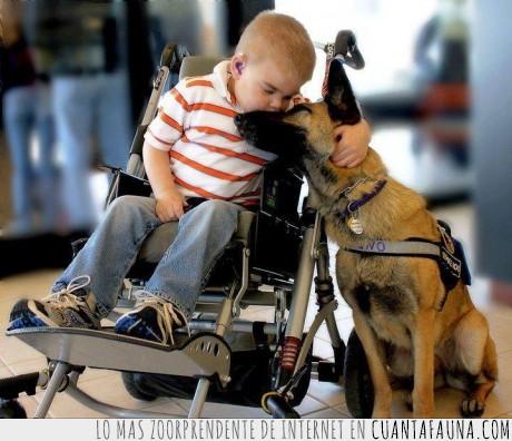 Amor incondicional,mejor amigo,niño,pastor aleman,perro,ruedas,silla,superar