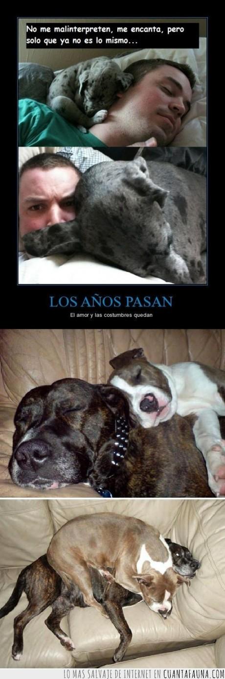 alma,cuello,dolor,dormir,exacto,hice  un cartel de mi propio cartel xD,perro