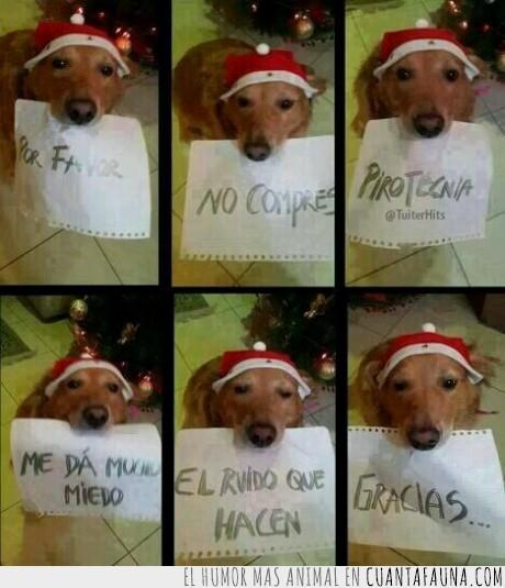 asustar,fin de año,navidad,perro,petardos,pirotecnia