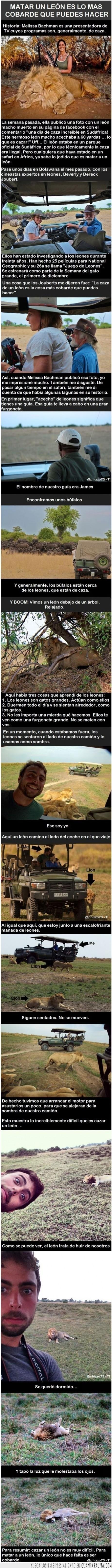 Animales,Buenos,Caza,Cobarde,Fail,León,Matar.,Safari