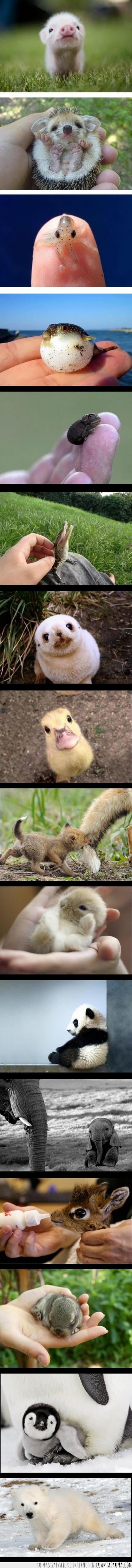 animales,bebe,cachorro,cria,cute,erizo,foca,mono,pequeño,tiernos