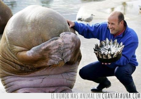 cara,foca,pastel,pescado,sorpresa,tapar