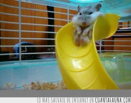 atrapado,es de hueso ancho,es gracioso y triste a la vez,hamster,jaula,jugar,tobogan