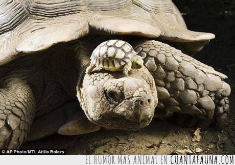 bebe,cria,edad,es su sombrerito :),madre,tortuga