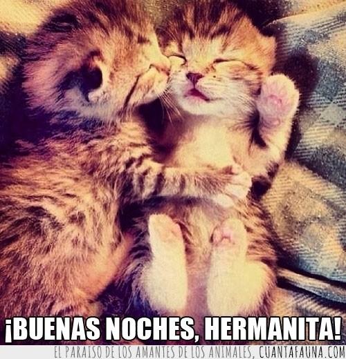 buenas noches,dormidos,Gatos,hermana,monadas,sueño