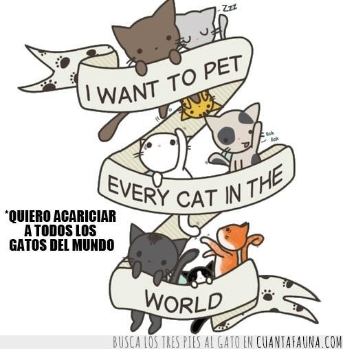 acariciar,dibujo,Gatos,mundo,pet,sueño,vida