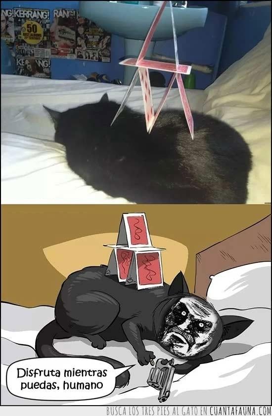 castillo de cartas,gato,pistola,venganza