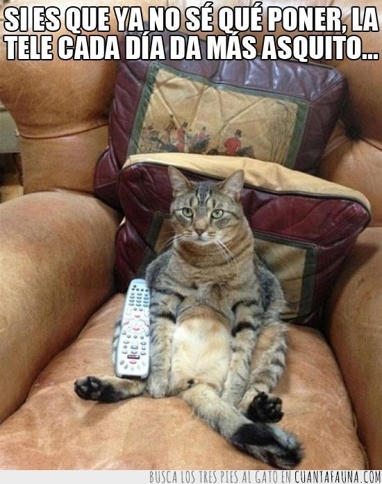 asco,garfield,gato,ocio,sentado,sillon,tele,television
