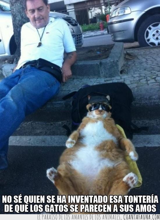 amos,dueños,gafas de sol,gato,gordo,parecerse,tirado