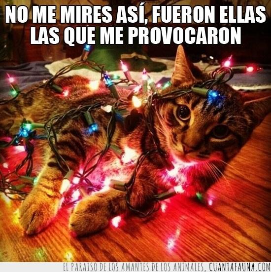 enredado,gato,luces de navidad,mentiroso,sorprendido