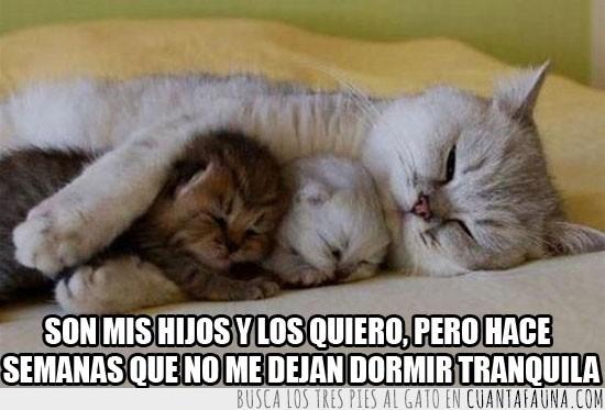 Amor,Compañia,Dejar dormir,Familia,Gato,Juntos