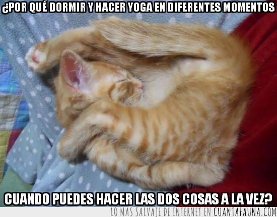 acostado,comodidad,dormir,gato,tumbado,yoga
