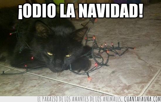 gato,luces,navidad,navideño,negro