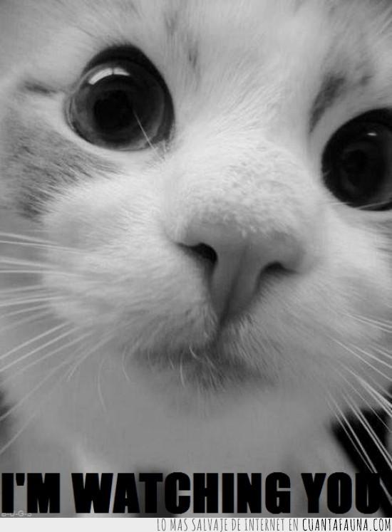 gato,mirada,mirar,vigilar