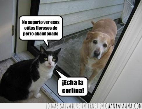 cerrar,cortina,echar,perro,puerta,soportar,ver