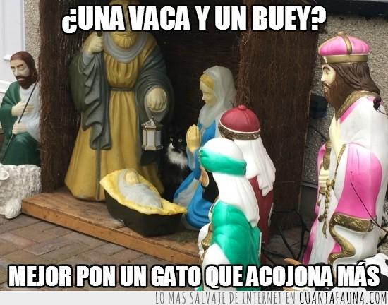 belen,gato,jesus,jose,nacimiento,pesebre,vigilar