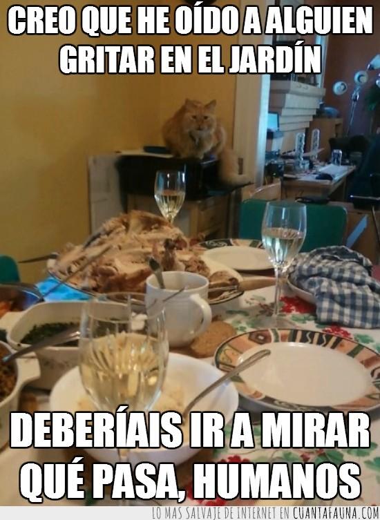 al acecho,como os despisteis,gato,humanos,mesa,restos de comida