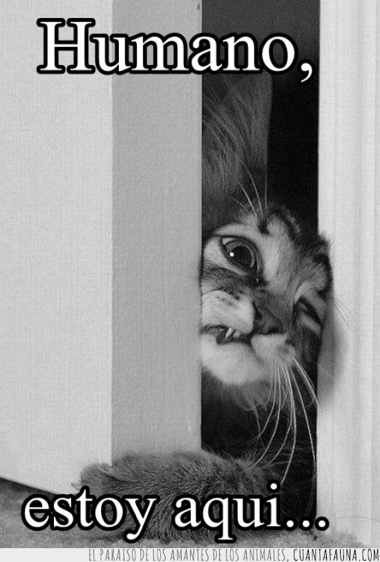 aplastado,estoy aquí,gato,humano,pan,puerta