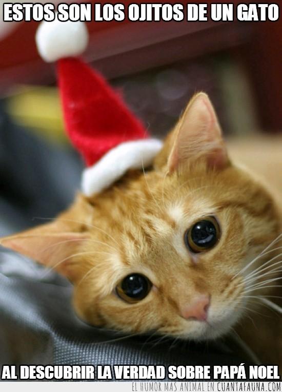 bonito,descubrir,Gato,navidad,ojos,papa noel,triste