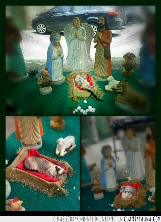 Belén,Escena,Gato Jesús,Nacimiento,Navidad