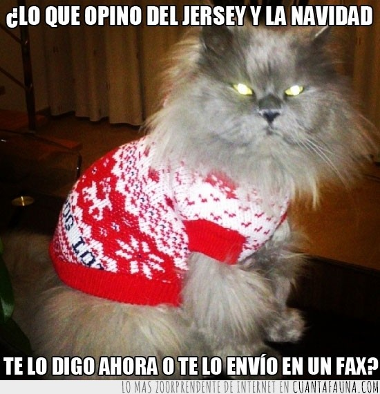 Careto,enfadado,Gato,jersey,Navidad,odio