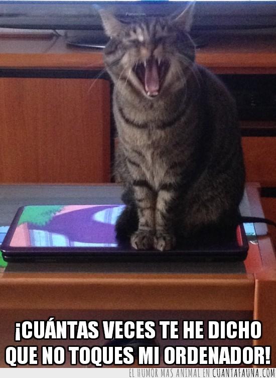 chillar,encima,gato,gritar,ordenador,sentado