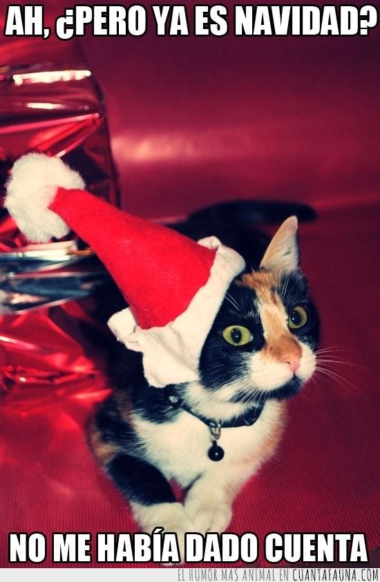 felicidades,fiestas,gorro,navidad,papa noel