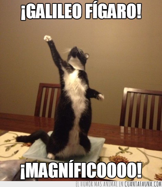 bohemian rhapsody,cantar,figaro,Freddie Mercury,galileo,Gato,magnifico,mesa