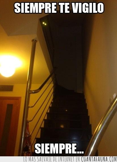 escalera,gato,largas,luces,ninja,ojos,oscuridad