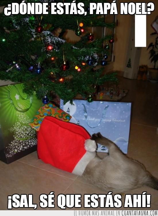 arbol,buscar,dentro,escondido,gato,gorro,navidad,Papa Noel