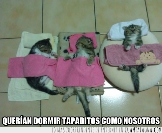 almohada,Cama,camitas,cojines,tapados,toallas