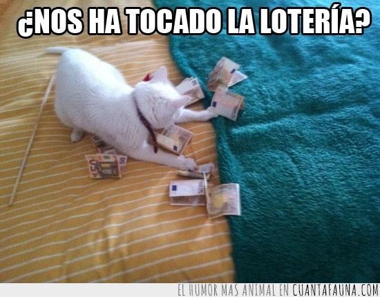 50 euros,billetes,juego,jugar,loteria