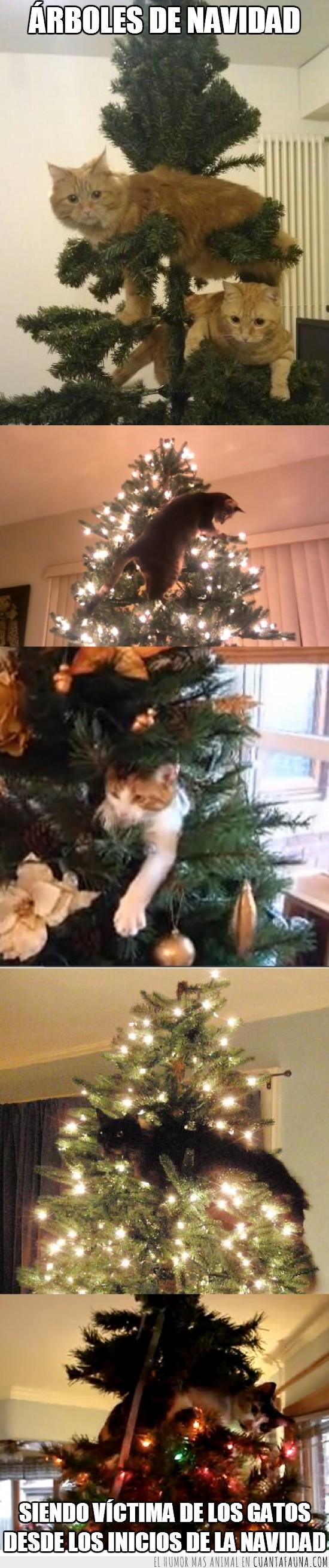 Arbol de Navidad,Enemigos naturales,Gatos destructores,Navidad