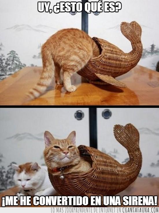 escultura,gato,mimbre,pez,simular,sirena