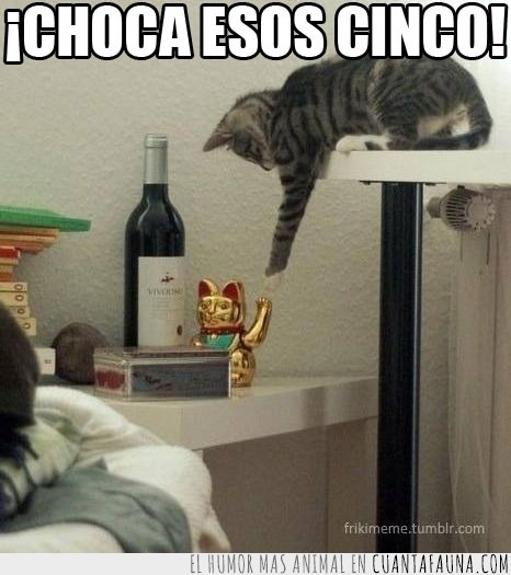 choca esos cinco,gato,maneki neko