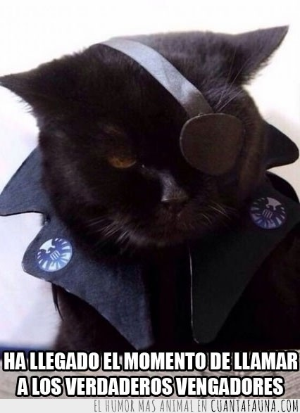 Gato,Los vengadores,Nick Furia,Nick Furry,Nick Fury