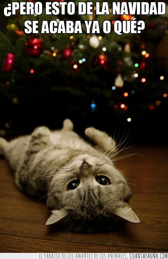 árbol,cansado ya,colores,felicitación,Gato,luces,Navidad