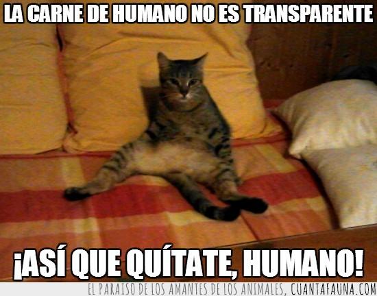 carne,gata,humano,quitar,quitate,transparente