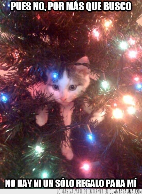 árbol de navidad,buscar,gato,navidad,regalos
