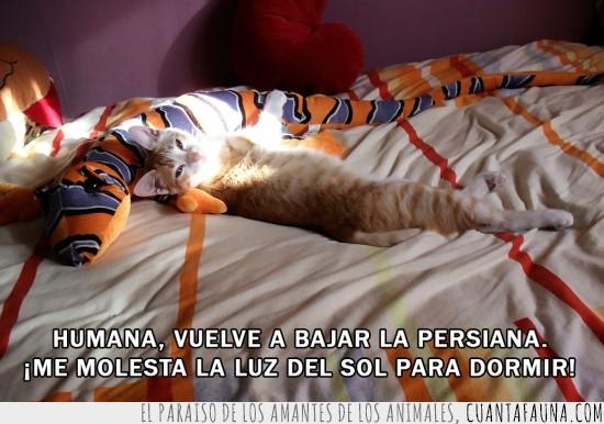 acostada,acostado,cama,dormir,gata,gato,humana,humano,luz,peluche,persiana,sol,sueño