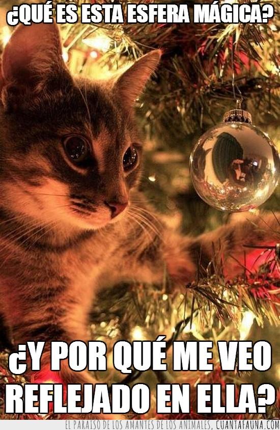 adornos,arbol navideño,bola,esfera mágica,Navidad,reflejado